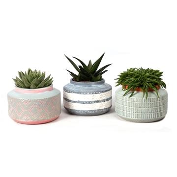 SP81) Succulent in keramieke boule pot Lund