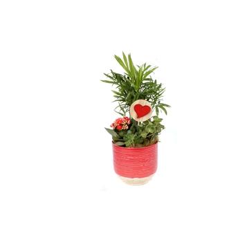 VA138 Opgemaakte keramieke pot met 3 planten en hart bijsteker