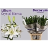 Lilium Or Crystal Blanca