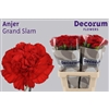 Dianthus St. Grand Slam Decorum