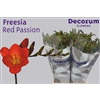 Freesia Red Passion