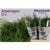 Asparagus green mix 60cm DC