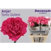 Dianthus St. Tonic Golem Decorum