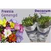 Freesia Gemengd 15 gram