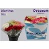 Dianthus St. Mix 5 kleuren per 10 (Price per bunch)