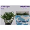 Asparagus mix 40cm DC EXP