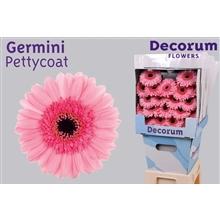 Germini diamond Petticoat