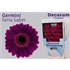 Germini diamond tsaf
