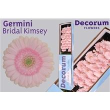 Germini box Bridal Kimsey
