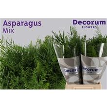 Asparagus green mix 60cm DCs