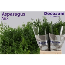 Asparagus green mix 80cm DCs