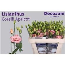 Lisianthus Corelli Apricot