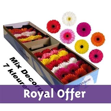 Gerbera Mix Decorum Royal offer.