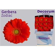 Gerbera Diamond Zodiac