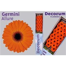 Germini box Allure